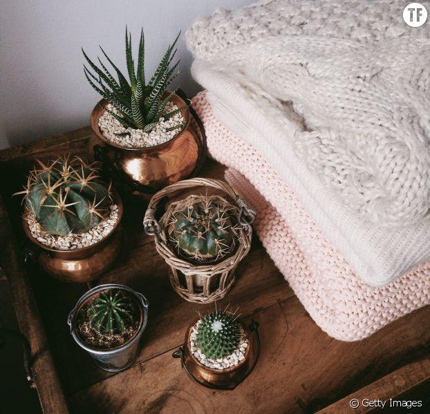 Ces 5 plantes d'intérieur vont vous aider à vous sentir bien