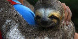 Les selfies des touristes menacent les animaux sauvages : une ONG alerte