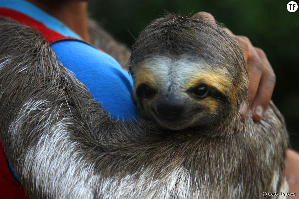 Une ONG lance une pétition pour protéger les animaux sauvages des selfies touristiques