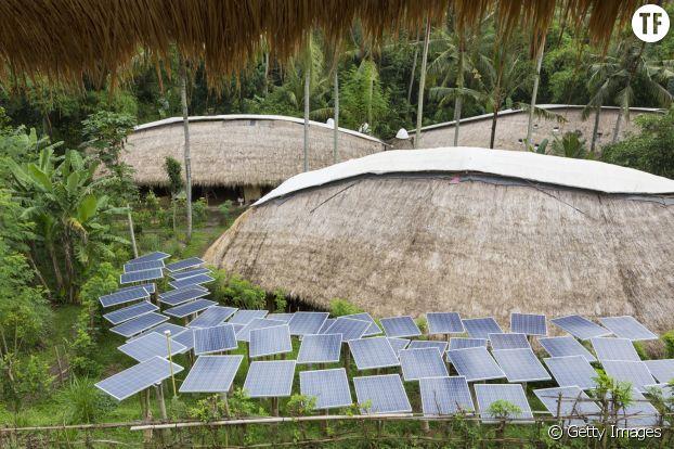 Des panneaux solaires dans un jardin tropical.