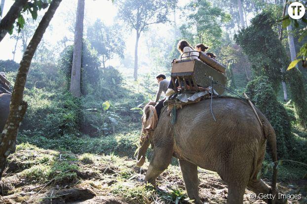 La balade à dos d'éléphant, très prisée en Asie.