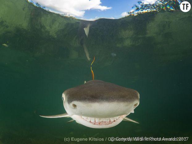 Un requin phographié par Eugene Kitsios.