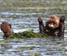 Voici les photos d'animaux sauvages les plus drôles de l'année