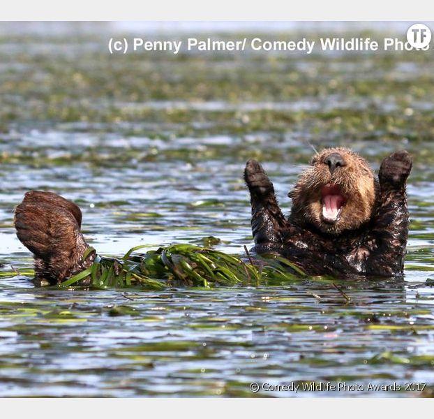 La photo d'un castor heureux de Penny Palmer.