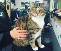 Ce salon de coiffure a adopté un chat pour aider les clients stressés