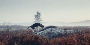 Des milliers de chiens abattus en Russie en vue de la Coupe du monde de foot