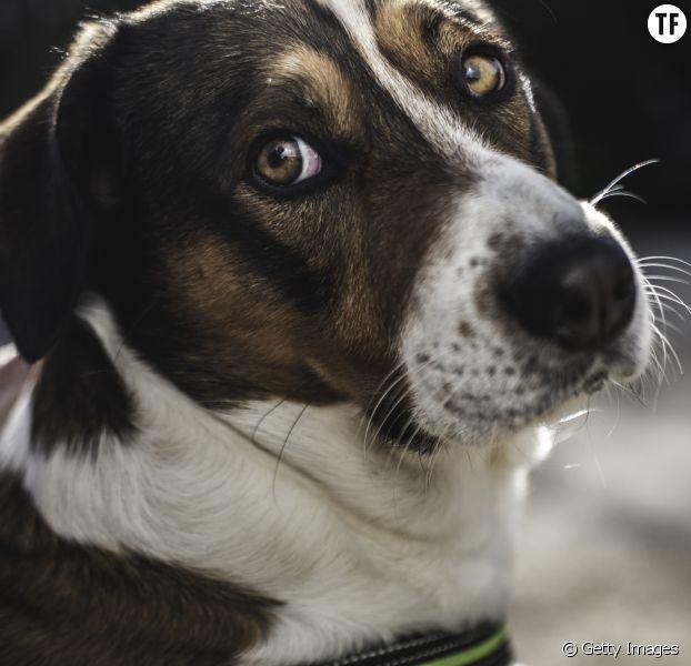 Une femme battue défendue par son chien — Espagne