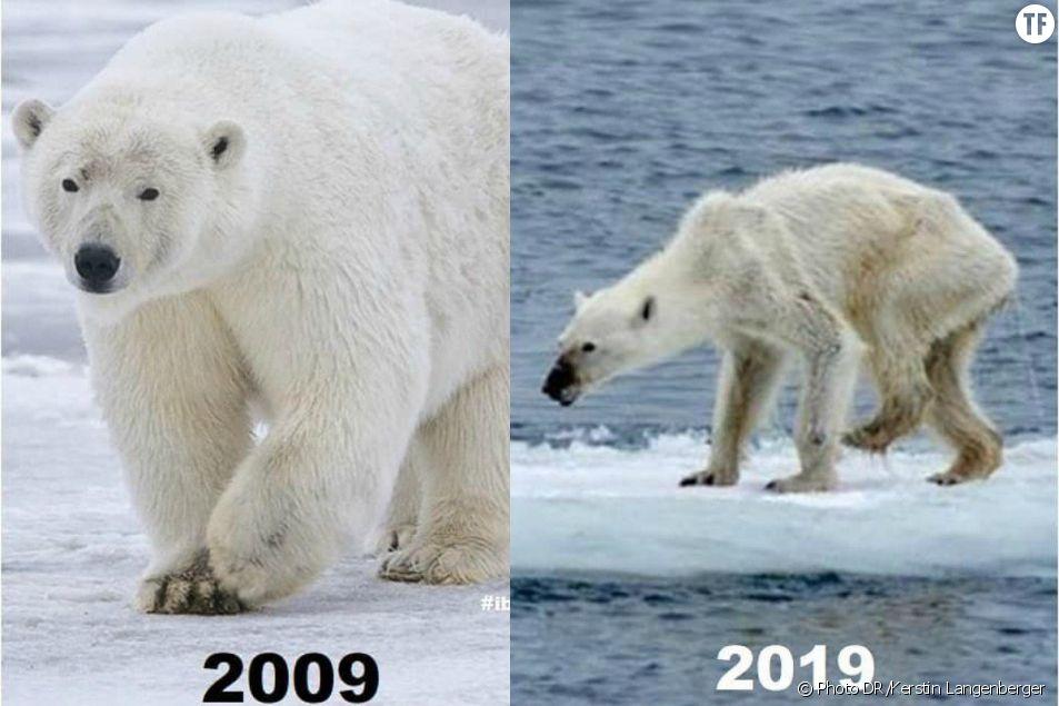Le 10 Years Challenge écologique
