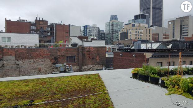 Le toit végétalisé du Centre Phi à Montréal