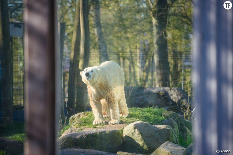 Ce zoo pourrait tuer des animaux pour en nourrir d'autres