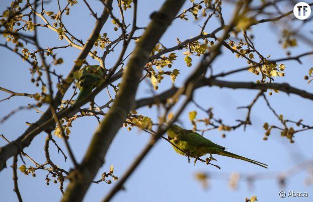 Des oiseaux observés à Paris en plein confinement.