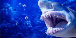 Nouvelle attaque de requin à la Réunion
