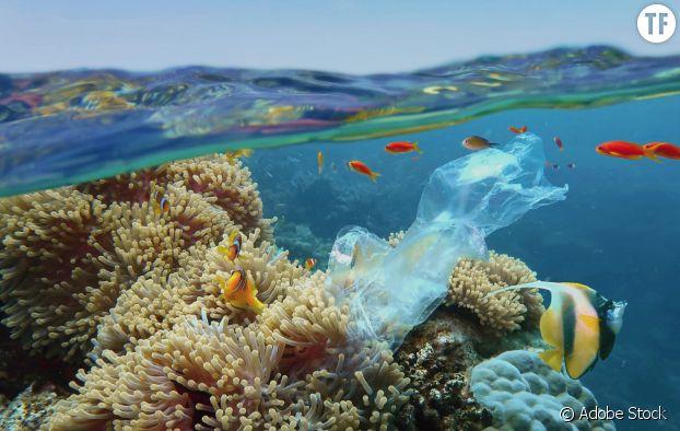 Déchets plastiques dans l'océan
