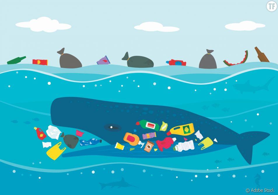 Comment protéger les océans et les animaux marins ?