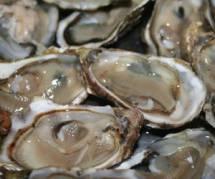 Des huîtres Britanniques contaminées par un virus