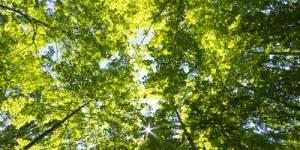 Croissance verte : où est le « new deal écologique » promis ?