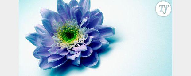 Langage des fleurs quelles fleurs offrir la saint for Offrir un miroir signification