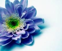 Langage des fleurs : quelles fleurs offrir à la Saint-Valentin ?