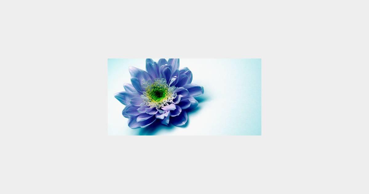 864d2af6a6e Langage des fleurs   quelles fleurs offrir à la Saint-Valentin   -  Terrafemina