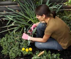 Que faut-il planter en août dans son jardin ou son potager ?
