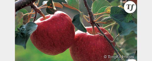 superfruit datant sites de rencontres Azerbaïdjan