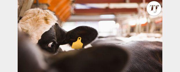 Journée mondiale pour l'abolition de la viande le 29 janvier