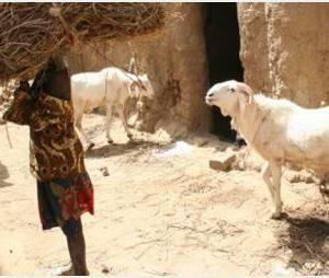 Mali : les islamistes mutilent les femmes non-voilées
