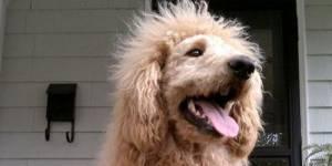 Les Français préfèrent prendre des photos de leur chien que de leur conjoint