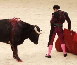 Tauromachie : le Parlement européen a-t-il donné le coup de grâce aux corridas ?