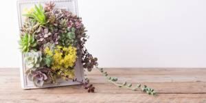 DIY green : comment faire un tableau végétal de succulentes