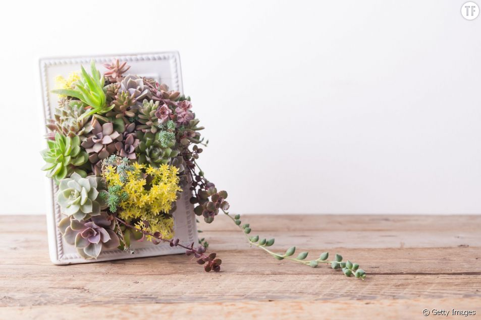 Comment créer un tableau végétale de succulentes