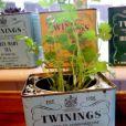 Du thé aux plantes