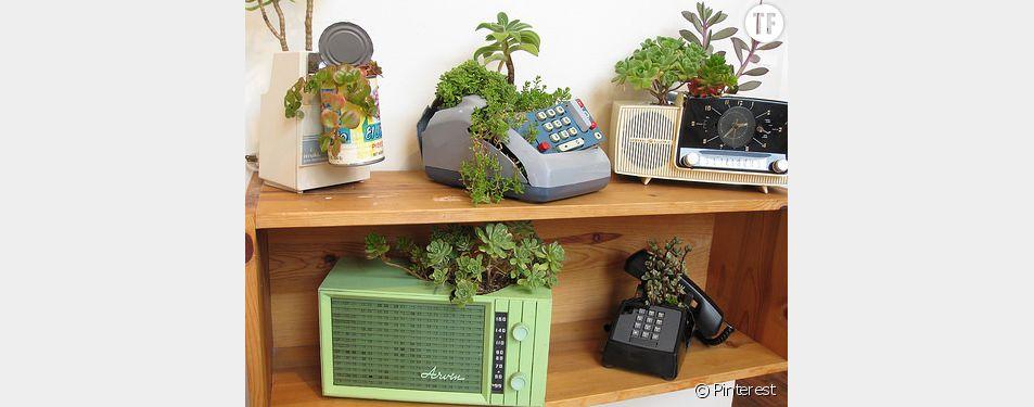 Des succulentes dans un vieux téléphone : la belle idée déco
