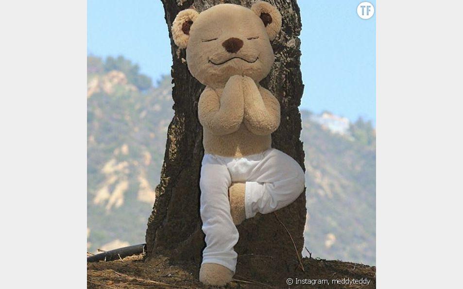 Meddy Teddy en pleine séance de yoga