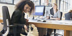 Amener son chien au travail, la clé du bonheur professionnel ?