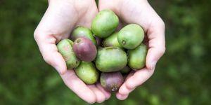 5 fruits qui changent des pommes à savourer cet automne