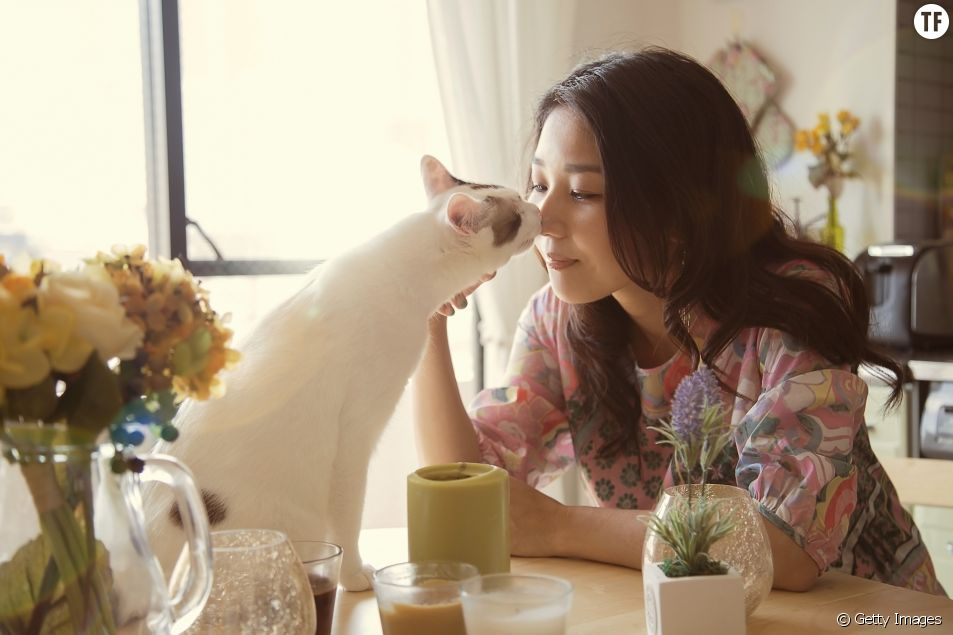 Votre chat vous aime : 7 signes qui le prouvent