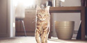 DIY : 6 idées déco pour cacher la litière de votre chat