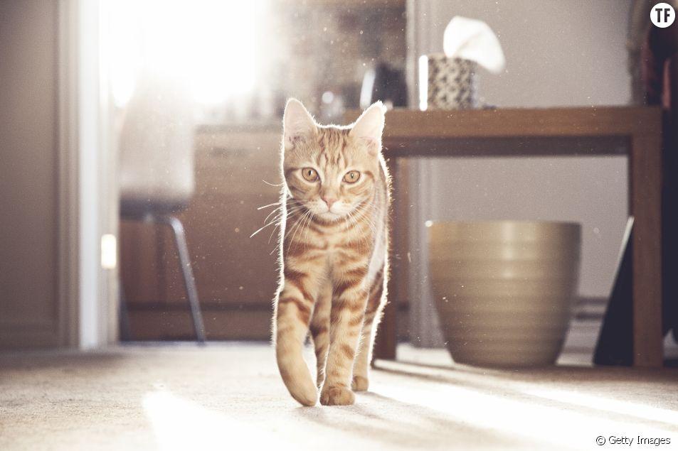 Déco DIY : 6 idées déco pour cacher la litière du chat