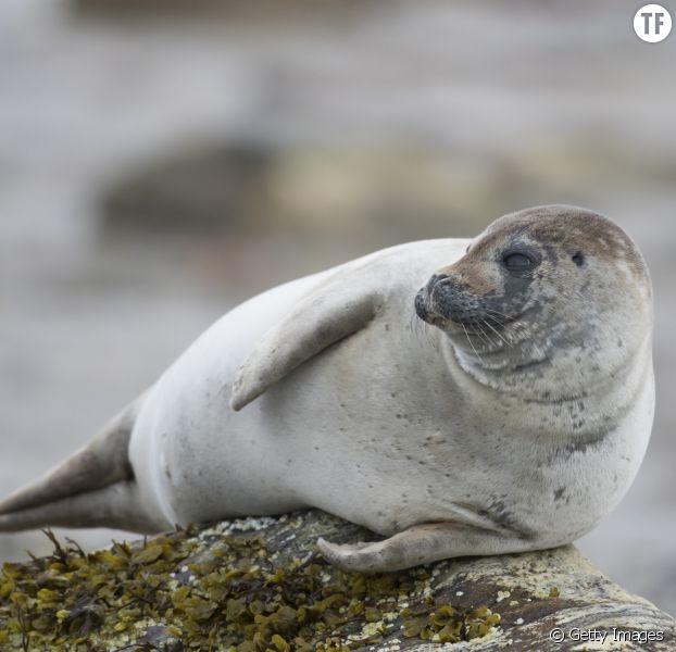 Des touristes se filment jetant des pierres sur des phoques