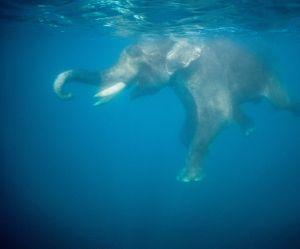 Une vidéo d'éléphant dans un aquarium en Thaïlande choque les internautes