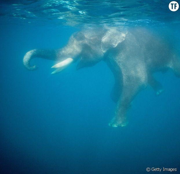 Thaïlande : un éléphant dans un aquarium fait polémique