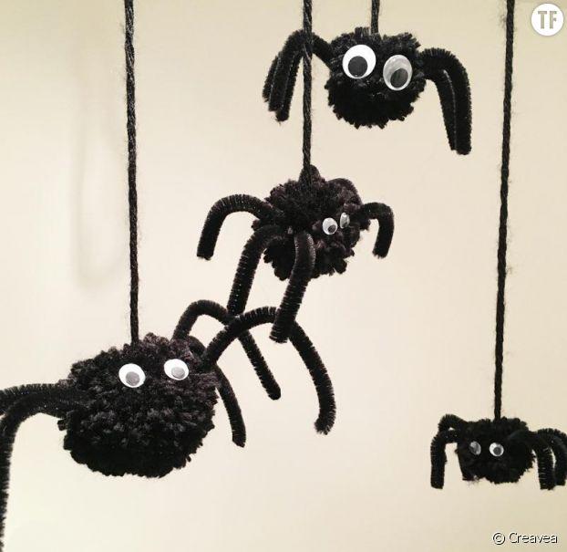 Les araignées pompons