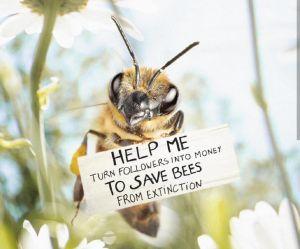 Cette abeille influenceuse veut sauver la planète