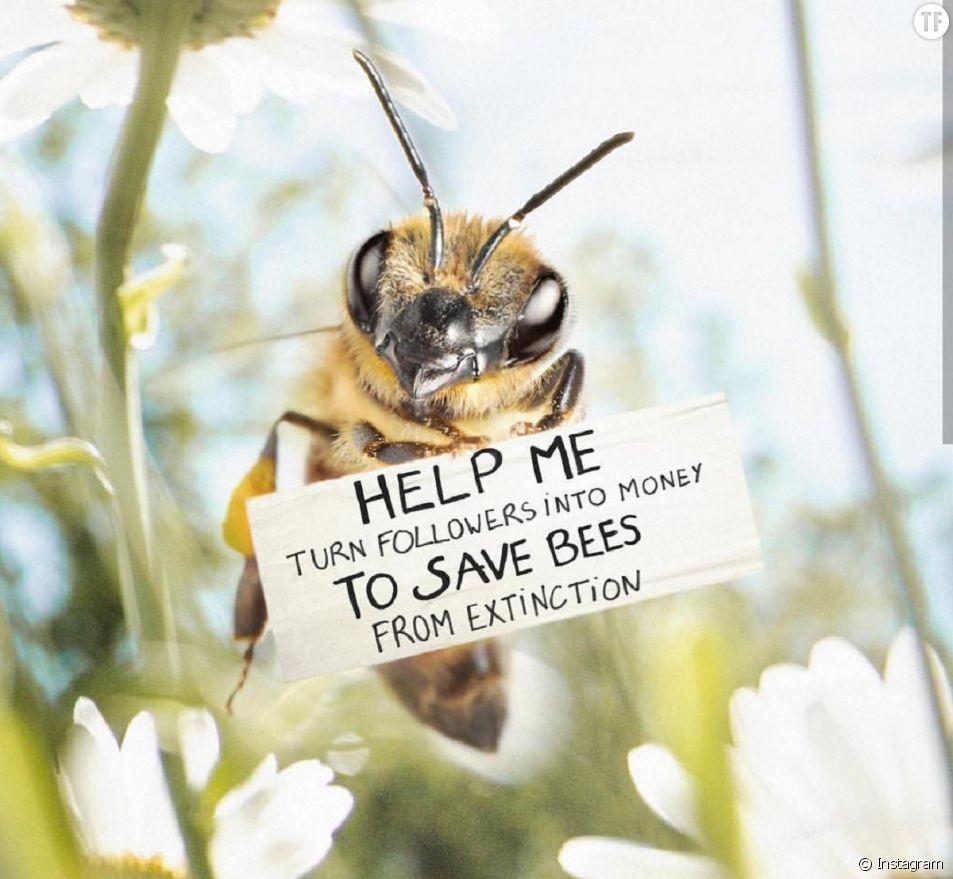 Cette abeille influenceuse appelle à l'aide sur Instagram
