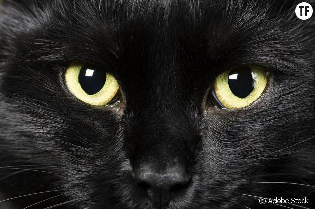 La superstition, une forme de trouble obsessionnel ?