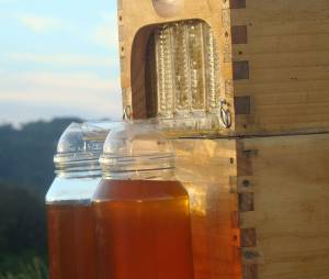 Les extraordinaires bienfaits du miel sur la santé