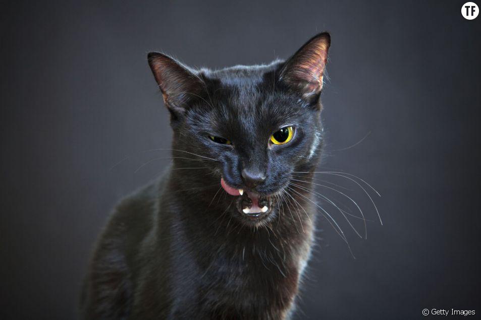 Votre chat cherche à vous tuer, c'est scientifiquement prouvé (enfin presque)