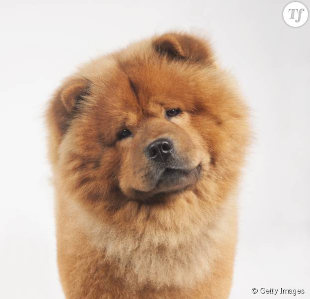 Pourquoi les chiens inclinent ils leur t te sur le c t - Comment couper les griffes d un chien ...