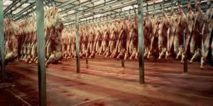 Une vidéo terrifiante dénonce les méthodes d'un abattoir certifié bio